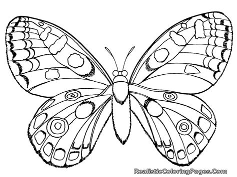 Coloring Pages Of Bugs And Butterflies | realistic insect coloring pages realistic coloring pages