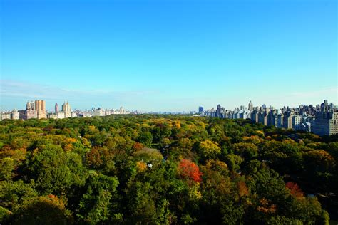 file leaves in the carlton new york city luxury 5 hotels the ritz carlton