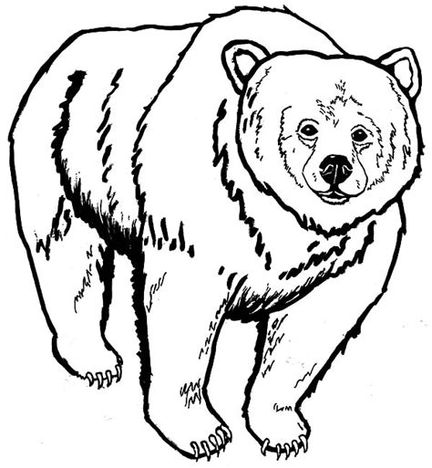 grizzly bear coloring download grizzly bear coloring
