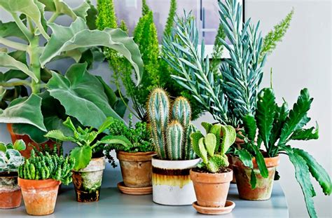where to buy house plants where can i buy house plants 28 images how to decorate with and style indoor