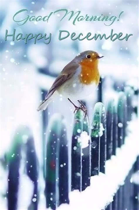 good morning happy december picture