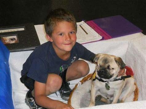 blind pug the blind pug who helps to heal 14 pics izismile