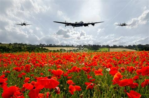 google images poppies spitfire and poppies images google search remembrance
