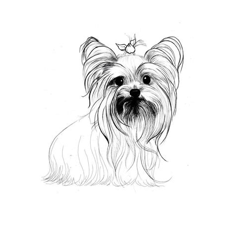 yorkshire terrier coloring pages dog breeds picture
