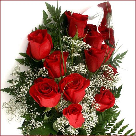 imagenes de rosas rojas hermosas image gallery imagenes con rosas rojas