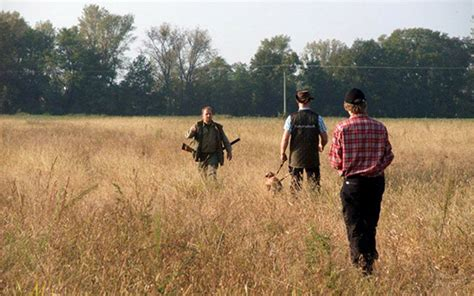 serbia sveits vm for st 229 ende fuglehunder og spaniels i 2015 norsk