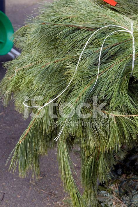 christmas garland for sale garden center stock photos