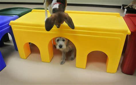 bulldog puppies peoria il puppy classes peoria il dogs our friends photo