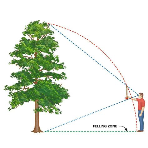 how to cut a tree cut a tree safely homestead ideas tree felling