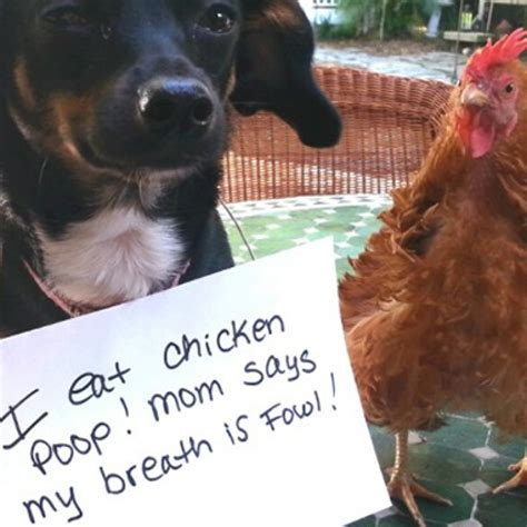 shaming pictures 21 of the best shaming pictures of all time barkpost