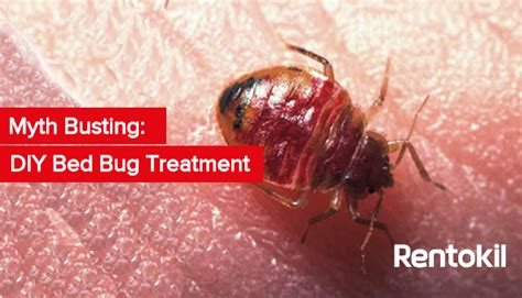 diy bed bug heat treatment christmas travel how to avoid bed bugs