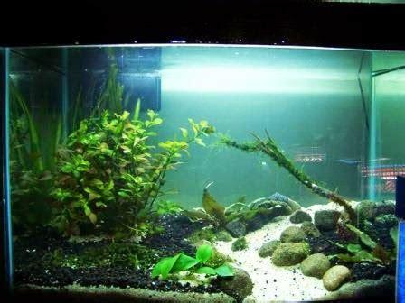 langkah sederhana membuat aquascape
