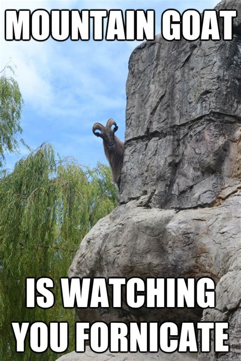 Funny Goat Memes - mountain goat memes