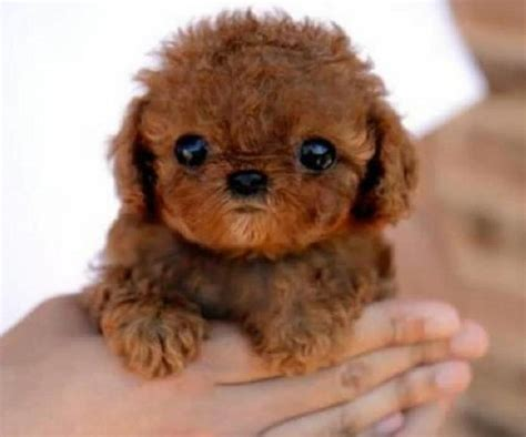 cutest baby puppies in the world the cutest in the world pictures the cutest things
