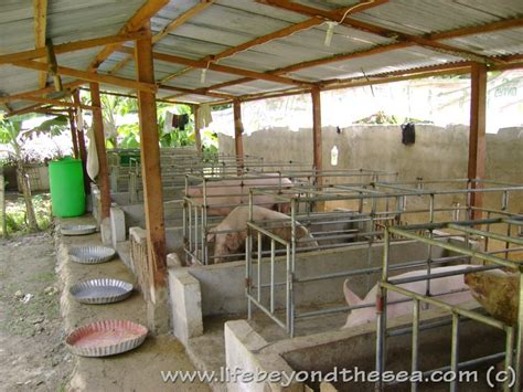 Backyard Piggery Business by Pig Farming Housing Plan House Design Plans
