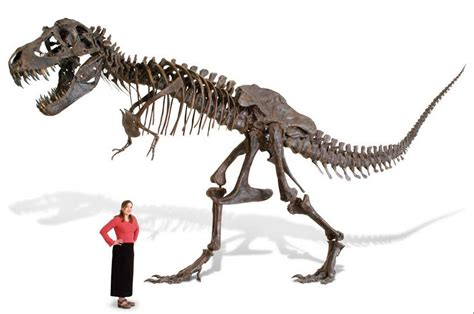 why you need a 100k life size t rex skeleton cnet