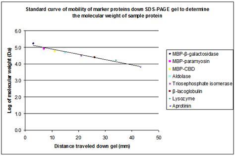 protein molecular weight calculator peptide molecular weight calculator mloovi