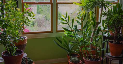 plants for the house 9 houseplants that clean the air and are nearly impossible to kill david avocado wolfe