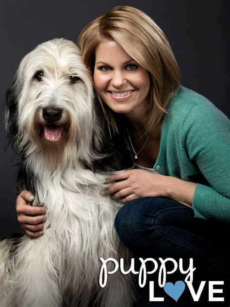 puppy tv show puppy tv show news episodes and more tvguide