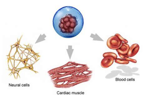 Laminine Stem Cell what is laminine laminine store