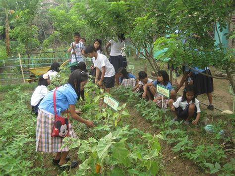 Gardening Nutrients Strengthening The School Nutrition Program In The