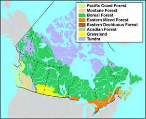 boreal forest the canadian encyclopedia