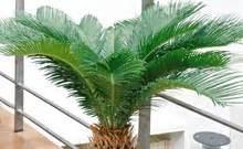 acheter palmier plantes pour la jardinerie truffaut