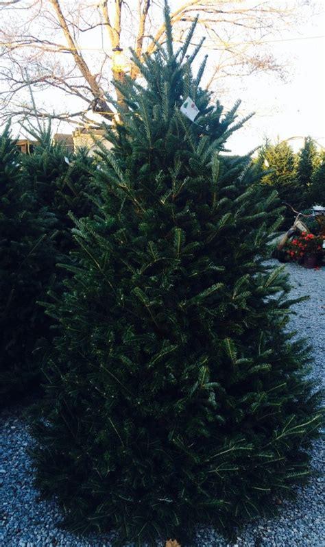 christmas trees nashville christmas trees at jvi secret