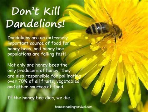 dandelions grow dandelions  filled