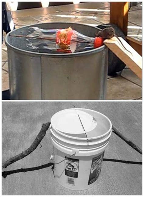 membuat perangkap tikus dari ember membuat perangkap tikus di kandang penangkaran burung