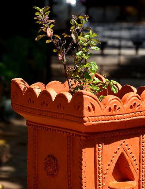 Vertical Garden tulasi brindavan 12 inches pot ocimum sanctum only