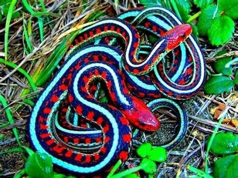 Animal World Snakes most venomous snake animal world 2015 the world s most