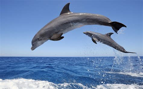 and dolphin channeled message from tulu the dolphin breathe talk2theanimals