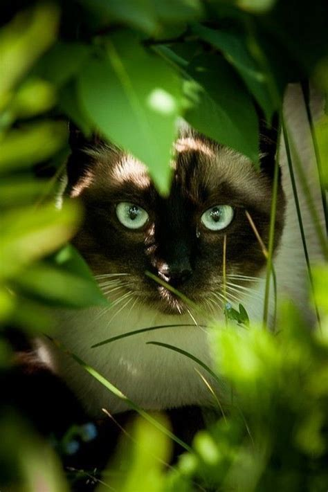 cat in grass on we heart it dogs and cats pinterest