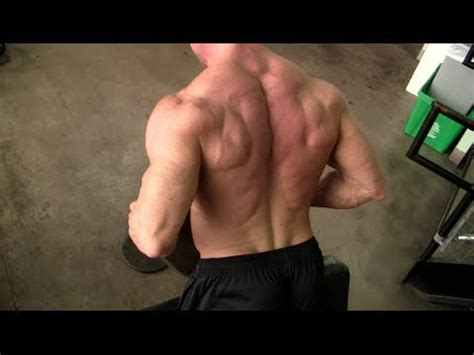 tree back muscles tree lower lats and erector spinae