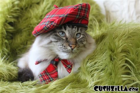 Cat Beret Hat cat hat hat plaid chatte beret from cushzilla