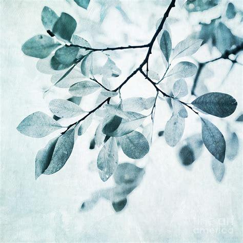 Nature Duvet Cover Leaves In Dusty Blue Photograph By Priska Wettstein