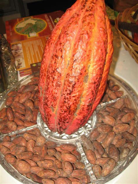 xocolatl 2 0 alimentos de