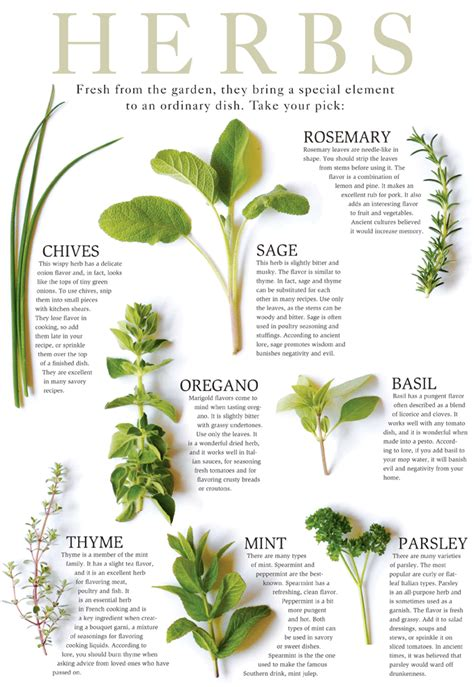 Herbs For Garden by Identification Of Herbs Wildr
