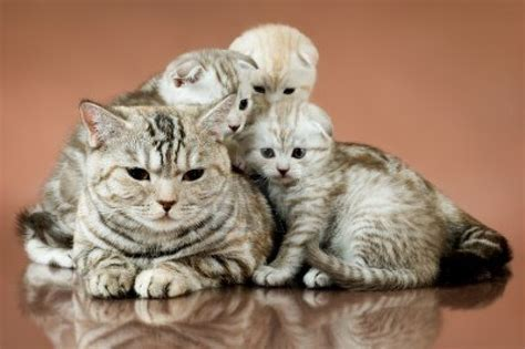 Cat Family Pictures Worth Sharing   Pets World