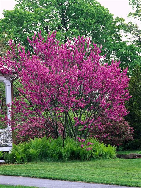small pink tree eye catching using focal plants landscaping ideas and