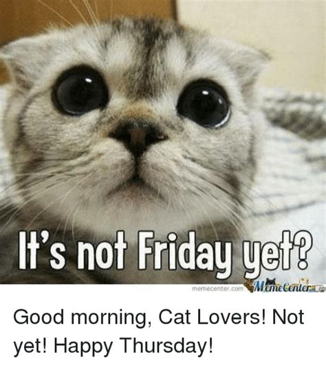 Good Meme Cat - 25 best memes about good morning cat good morning cat memes