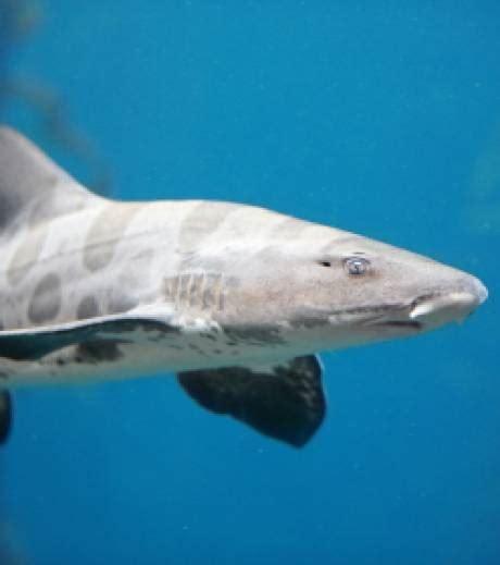 Femme De Ménage De Luxe 2344 by Une Plongeuse Nage Avec Des Requins