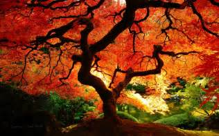 maple colors 1000 images about japanese landscape on