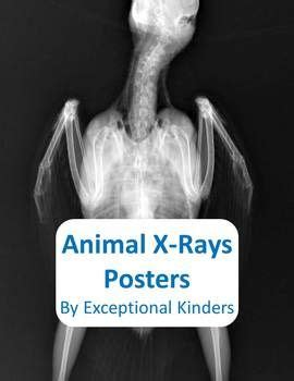 animal  ray posters preschool ideas  save pinterest