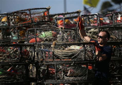 california crab fishermen struggling as algae blooms here now
