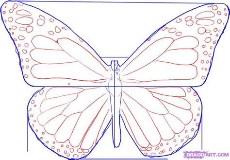 monarch butterfly template printable www imgkid com