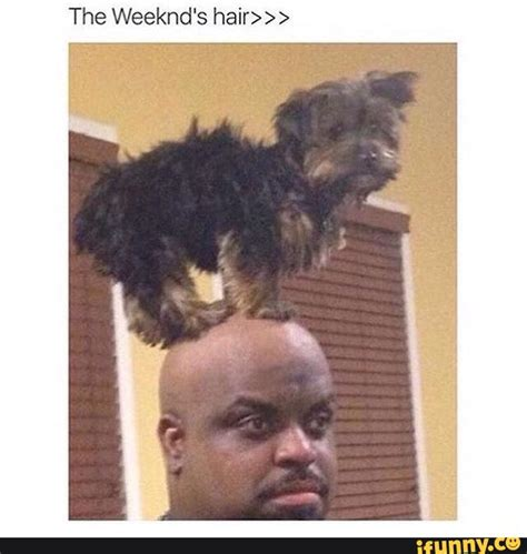 the weekend haircut hair cut ifunny