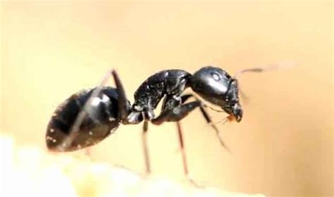 what attracts ants in the bedroom what attracts ants in the bedroom bedroom ideas