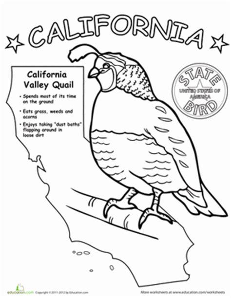 california bird coloring page california state bird worksheet education com